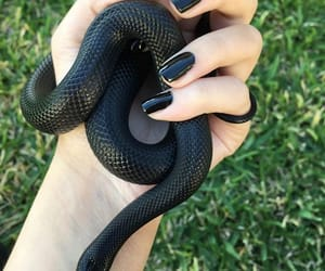 black, snake, and aesthetic image