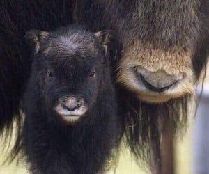 animal and baby image