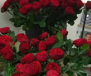aesthetic, red roses, and flower aesthetic image