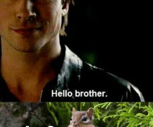 chipmunk, joe, and Vampire Diaries image