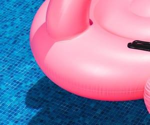 background, flamingo, and pool image