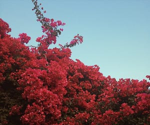 algarve, alone, and flowers image