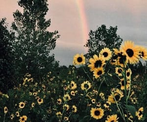 flowers, rainbow, and sunflower image