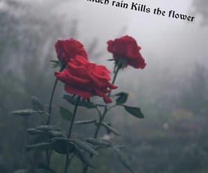 flower, kill, and sad image