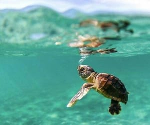 animals, baby, and turtle image