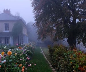 aesthetic, nature, and foggy image