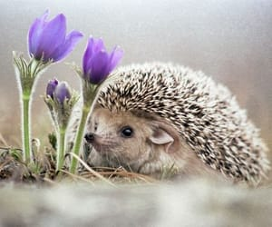 animals and hedgehog image