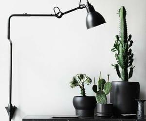black, cactus, and lamp image
