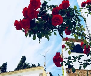 Espagne, flower, and rose image