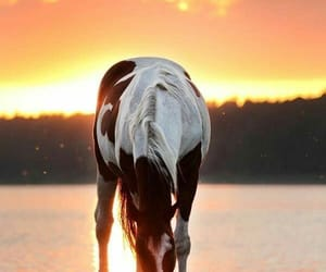 awesome and horses image