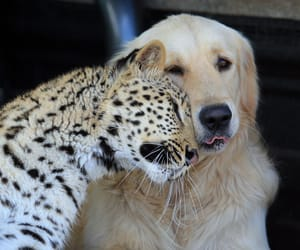 dog, animal, and leopard image