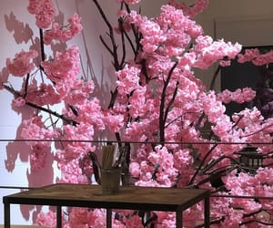 blossom, cherry, and japan image