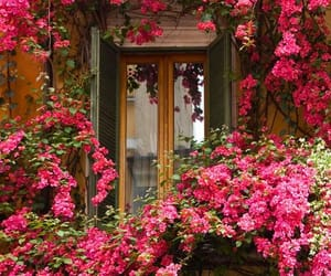 design, flowers, and exterior image