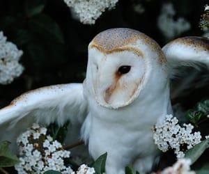 owl, nature, and animal image