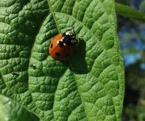 countryside, green, and ladybug image