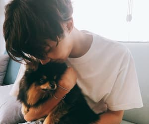 puppy, j hope, and hyung image