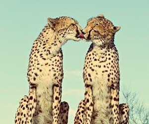Animales, jaguar, and naturaleza image