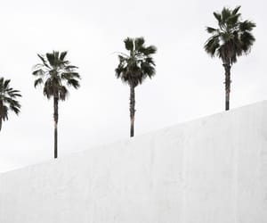palmtrees and white image