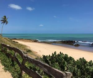 brazil, beach, and nordeste image