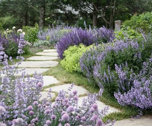 beautiful, garden, and lavender image