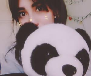 cat, panda, and dulce image