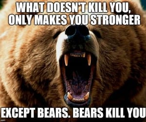 bears, funny, and meme image