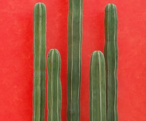cactus, red, and green image