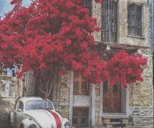 red, flowers, and vintage image