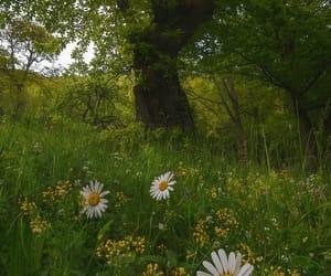 beautiful, nature, and calm image