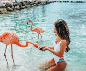 beach, animal, and girl image