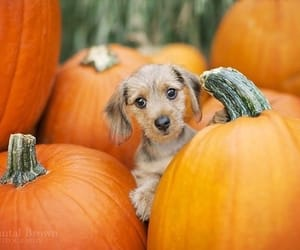 Halloween, puppy, and cute animals image