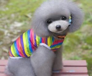 lgbt, gay pride shop, and lgbt pet supplies image