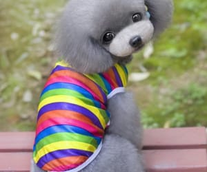 lgbt gifts, queerks, and gay pride image