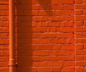 apricot, orange, and sdmnxoxo image