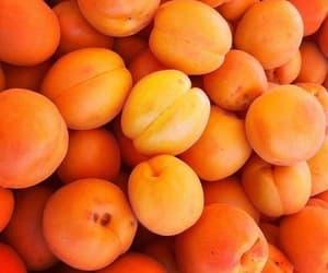 orange, sdmnxoxo, and apricot image