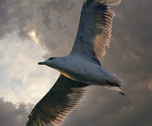 bird, nature, and seagull image