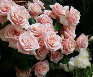 flowers, roses, and sea image