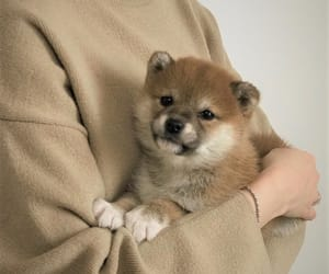 beige, dog, and puppy image