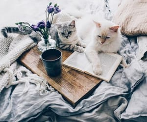 cat, animals, and book image