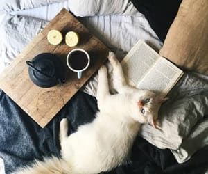 cat, bed, and home image