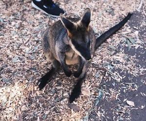 animals, australia, and filter image