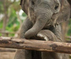 elephant, cute, and love image