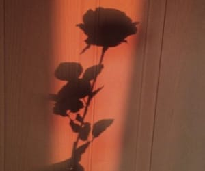 aesthetic, heartbreak, and rose image