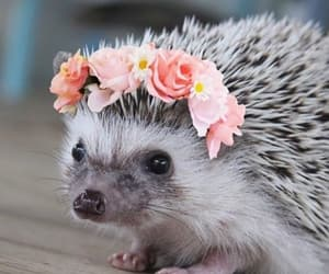hedgehog, cute, and flowers image