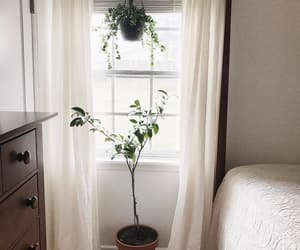 bedroom, plants, and window image