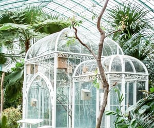 greenhouse, garden, and nature image