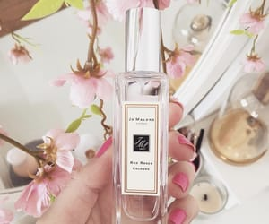beauty, perfume, and rose image
