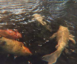 fish, water, and aesthetic image