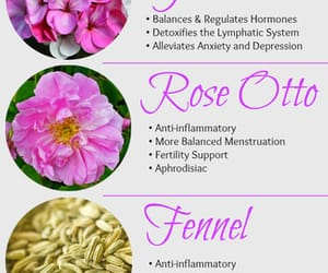 recipes, pcos, and pcos information image