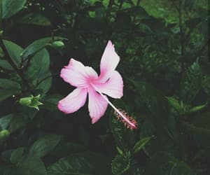 beauty, flower, and green image